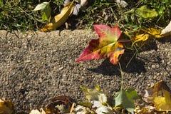 Kolorowy liść klonowy przy ulica Obrazy Stock