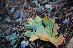 Kolorowy liść na Chrupiącej ranek ziemi Fotografia Stock