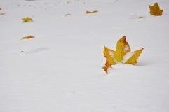 Kolorowy liść w białym śniegu Obraz Royalty Free