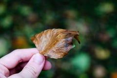 Kolorowy liść z rozmytym tłem zdjęcie stock