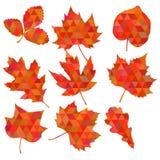 Kolorowy liścia tło, eps10 wektor Obrazy Stock