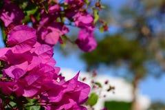 Kolorowy makro- kwiatu tło z niebieskim niebem z bliska Zdjęcie Royalty Free