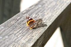 Kolorowy motyl na drewnianej desce zdjęcie royalty free