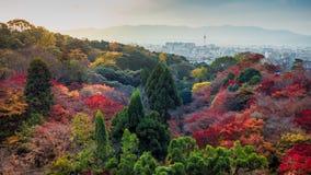 Kolorowy od nieba i chmury z czerwonym kolorem żółtym i zielonym klonowym drzewem Fotografia Royalty Free
