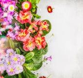 Kolorowy ogród kwitnie kwiecistą granicę Fotografia Royalty Free