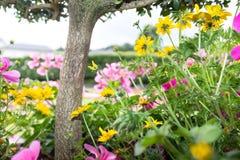 Kolorowy ogród w kasztelu -3 Obrazy Royalty Free