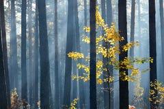 Kolorowy osamotniony drzewo w lesie Obrazy Royalty Free