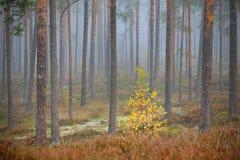 Kolorowy osamotniony drzewo w lesie Fotografia Royalty Free