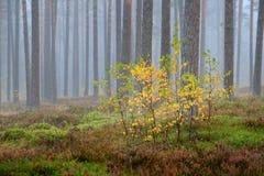 Kolorowy osamotniony drzewo w lesie Zdjęcie Royalty Free