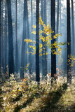 Kolorowy osamotniony drzewo w lesie Zdjęcia Stock