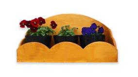 Kolorowy pansy kwitnie w flowerpot. Zdjęcia Stock