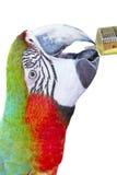 Kolorowy papuzi ptak, ara, zieleni i czerwieni Zdjęcia Royalty Free