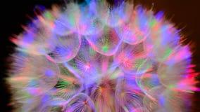 Kolorowy Pastelowy tło - żywy abstrakcjonistyczny dandelion kwiat Obraz Royalty Free