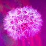 Kolorowy Pastelowy tło - żywy abstrakcjonistyczny dandelion kwiat Fotografia Royalty Free