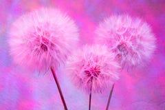Kolorowy Pastelowy tło - żywy abstrakcjonistyczny dandelion kwiat Zdjęcie Royalty Free