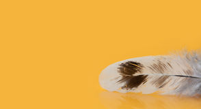Kolorowy piórko textured makro- widok fotografia Pięknego kurczaka upierzenia ptasi wzór na żółtym tle Płytka głębia Zdjęcia Stock