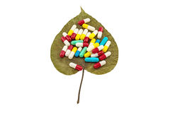 Kolorowy pigułki na suchym Świętej figi liścia Ficus religiosa L , Pipal drzewo, Bohhi drzewo, Bo drzewo, Peepul na białym tle Zdjęcia Royalty Free