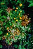 Kolorowy podwórka shrubbery Obrazy Royalty Free