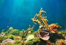 kolorowy podwodny świat zdjęcia royalty free