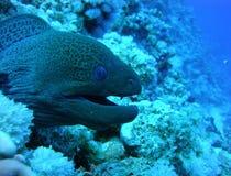 Kolorowy podwodny świat Czerwony morze obrazy stock