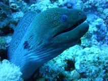 Kolorowy podwodny świat Czerwony morze obrazy royalty free