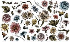 kolorowy projekta elementów kwiatu set ilustracji