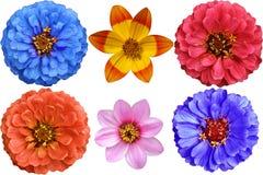 kolorowy projekta elementów kwiatu set Obrazy Stock