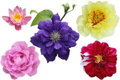 kolorowy projekta elementów kwiatu set Zdjęcia Royalty Free
