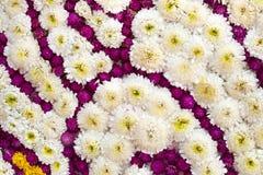 Kolorowy projekta wzór kwiatu tło i tekstura Zdjęcia Stock