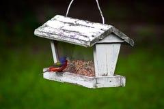 Kolorowy Ptasi łasowanie przy rocznika ptaka dozownikiem Zdjęcia Stock
