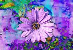 KOLOROWY PURPUROWY stokrotka kwiat obraz royalty free