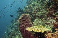 kolorowy rafowy underwater Zdjęcie Stock