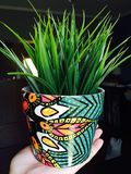 Kolorowy roślina garnek obrazy royalty free