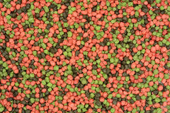 Kolorowy rybi jedzenie dla akwarium Zdjęcie Stock