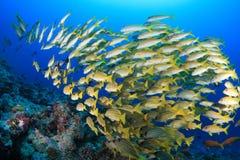 kolorowy rybi tłum obraz royalty free