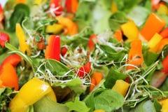 kolorowy sałatkowy warzywo Fotografia Royalty Free