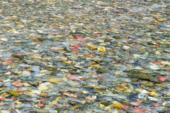 Kolorowy skała połysk pod jasnym nawadnia obraz royalty free