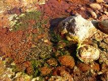 Kolorowy skała Zdjęcie Stock