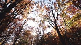 Kolorowy spada jesień liści narzuty wizerunek brud ścieżki lesisty lasowy ślad zbiory wideo