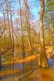 Kolorowy stojąca woda las zdjęcie stock