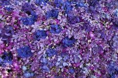 Kolorowy storczykowy kwiat Fotografia Stock