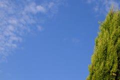 Kolorowy tło z kopii przestrzenią: zielony cyprys przeciw niebieskiemu niebu z chmurami zdjęcia royalty free