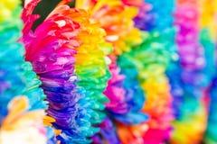 Kolorowy tęczy chryzantemy kwiat Zdjęcia Stock