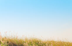 Kolorowy trawy pola tło zdjęcie royalty free
