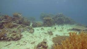 Kolorowy tropikalny rybi dopłynięcie nad rafą koralową na dno morskie podwodnym widoku Podwodnego dopatrywania denny świat podcza zbiory