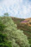 Kolorowy ulistnienie na wzgórzach nad St Margaret's Loch, Edynburg, obraz royalty free