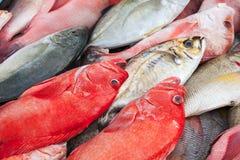 Kolorowy ?wie?ej ryby asortyment, Malezja zdjęcia stock