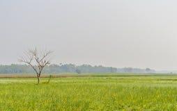 Kolorowy wiosna krajobraz z żółtym gwałtem: To jest fotografia Piękny rapeseed kwiatu pole chwytający od Pogodnego pola Zdjęcie Royalty Free