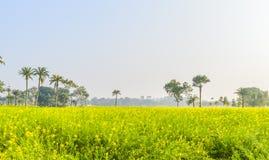 Kolorowy wiosna krajobraz z żółtym gwałtem: To jest fotografia Piękny rapeseed kwiatu pole chwytający od Pogodnego pola Obraz Stock