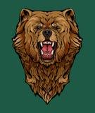 Kolorowy wizerunek gniewny niedźwiedź obrazy royalty free